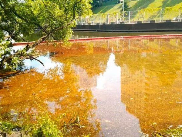 Химкинский водоём залило нефтепродуктами - гибнет флора и фауна (ВИДЕО)